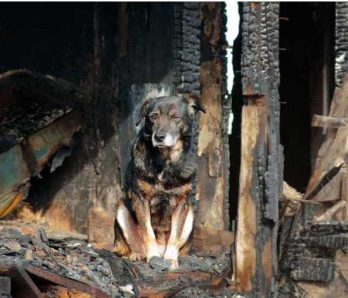 Fire Damage Tips to Protect Your Pets From Fire