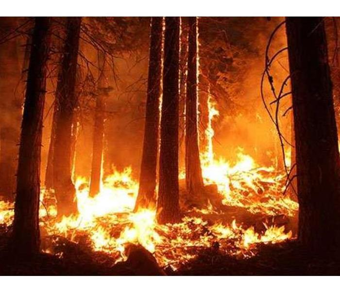 Fire Damage 10 Things You May Not Know About Wildfires